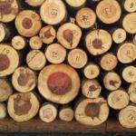 体積測定中の薪原木