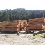 天日乾燥中の材木
