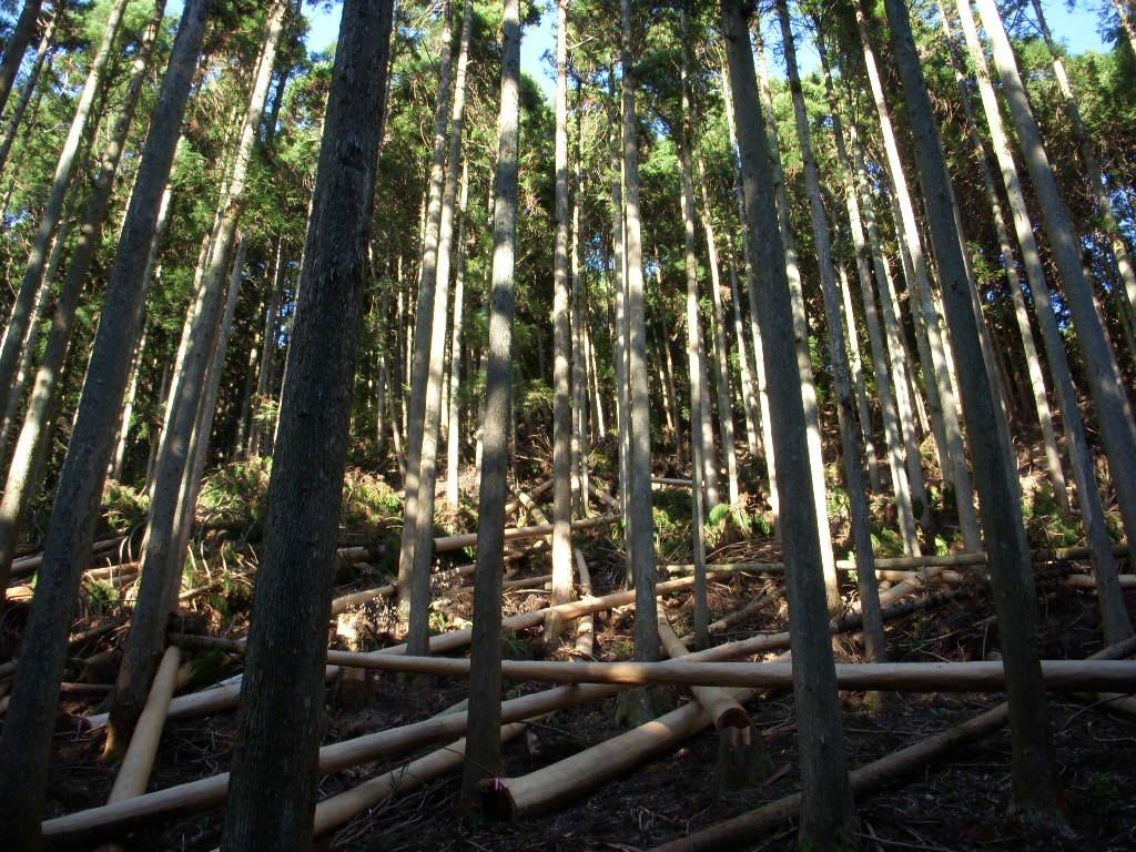 月齢伐採・葉枯らし乾燥・天然乾燥 もりずむの木(三重県の建築木材 ...