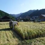 稲刈りの練習をしました〜!