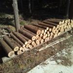 「森づくり」イベントの準備が進んでいます!