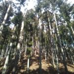 エコハウス研究会の皆さんにも林業見学に来ていただきました!
