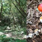 豊かな里山を支える生き物達・菌類研究へのクラウドファンディングのご案内!