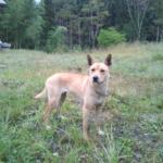 今年も「鹿追犬」のトレーニングをしていただきました!