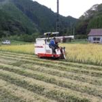 今年も稲刈り完了しました〜!