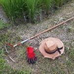 田んぼの「草抜き」は至福の時間です〜!