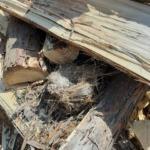 薪の隙間に鳥の巣が〜!