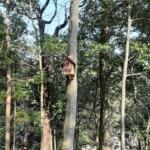 美里水源の森イベント、今回は「巣箱つくり」で楽しみました〜♪